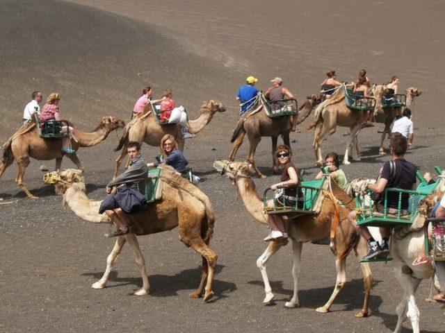 Cerca del Parque Nacional de Timafaya Los camellos