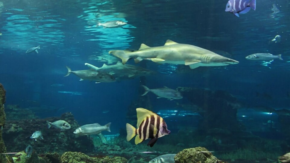 Aquarium Lanzarote