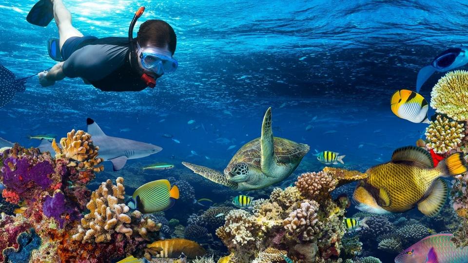 Diversión en Lanzarote; Snorkel