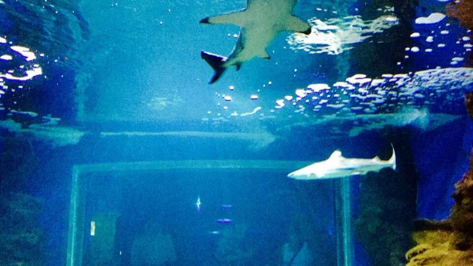 Excursión familiar al Aquarium Lanzarote