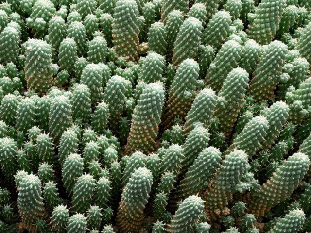 Jardín del Cáctus en Lanzarote