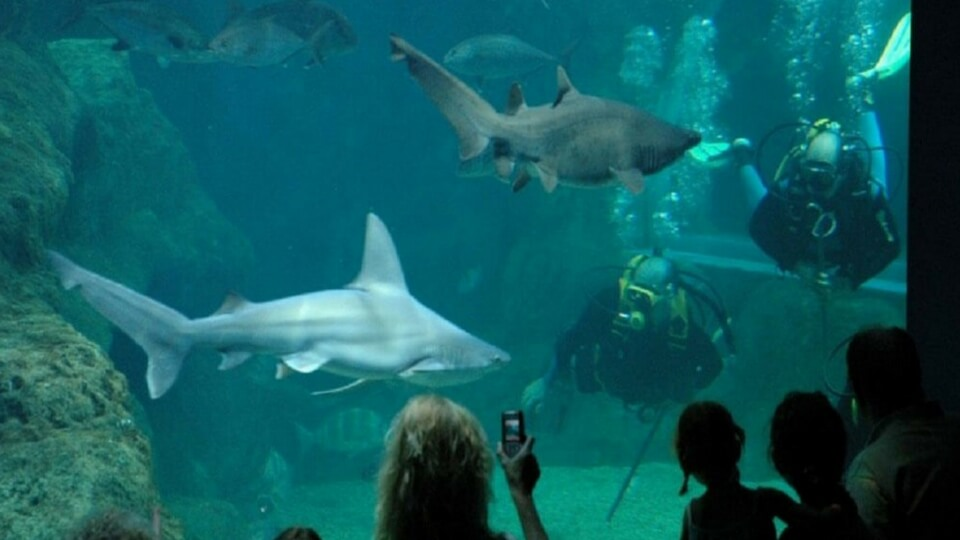 Ocio familiar en Lanzarote - Aquarium Lanzarote